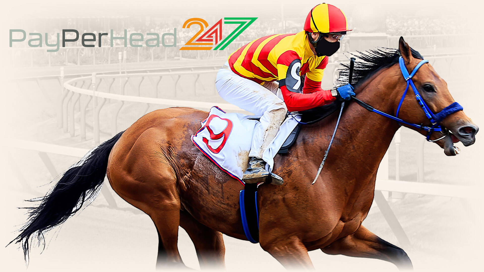 Thousands of Bookies Have Turned to PayPerHead247